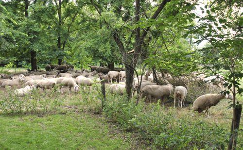 Az elmúlt években is sok szó esett a tanyák sorsáról, de érdemi intézkedés nem történt.