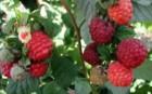 4 millió forintos pályázat a kertészeknek
