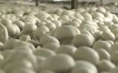 Támogatás a zöldség és gyümölcs termelőknek
