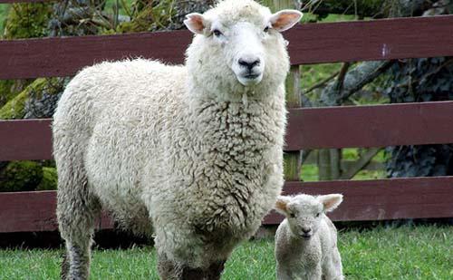 Az állattenyésztést támogatják