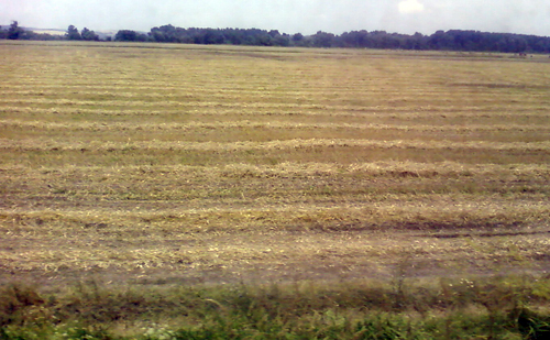 Fiatal Gazda, termőföld, mezőgazdaság