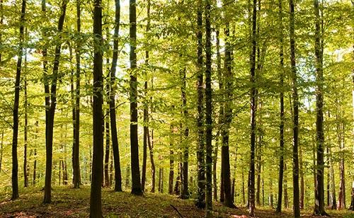 Súlyos büntetés jár az illegális fakitermelésért
