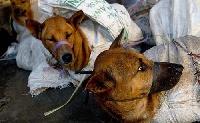 Idén is tiltakoztak a dél-kínai kutyahúsfesztivál miatt