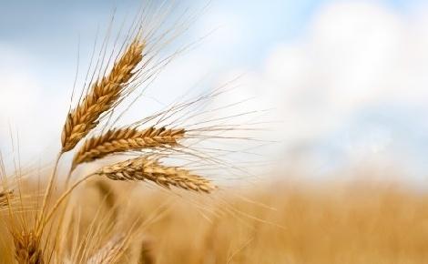 Javult az agrárágazat jövedelmezősége