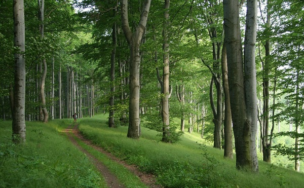 A következő ötven évben 600 ezer hektár új erdőt kellene telepíteni