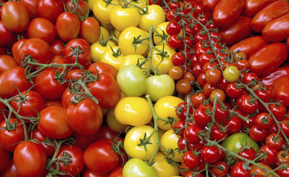 GMO-mentes termelés
