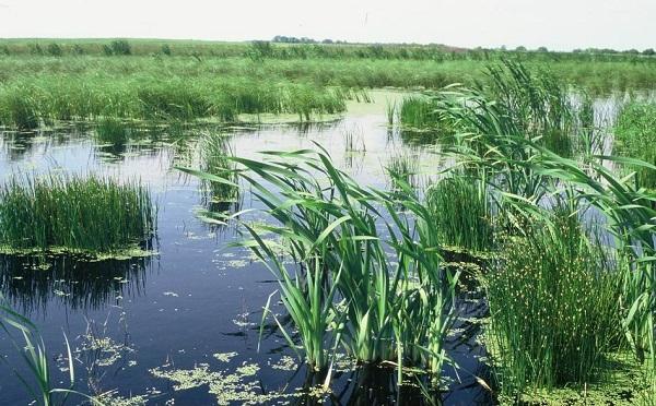 Több mint százezer hektáron javul az élőhelyek állapota