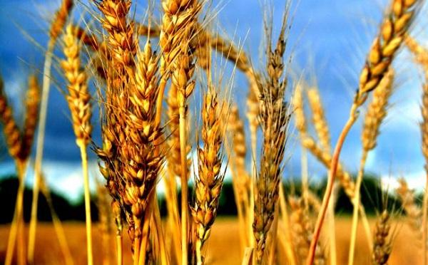 A közös uniós agrárpolitika a magyar gazdák helyzetét is javítja