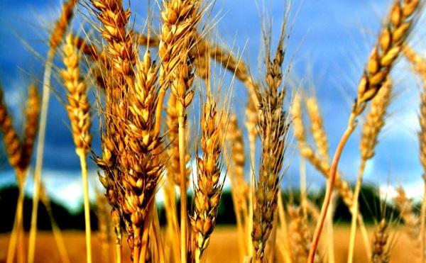 A magyar agrárkutatási eredmények vilászínvonulúak