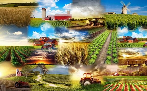 A magyar agrárkutatási eredményeket a környező országokban és Közép-Ázsiában is keresik