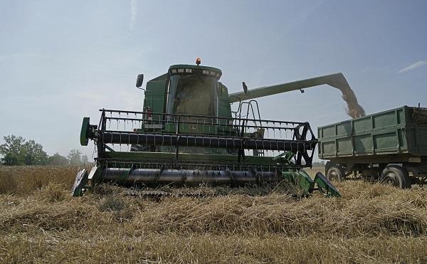 Fazekas: jobb minőségű lesz idén a gabona