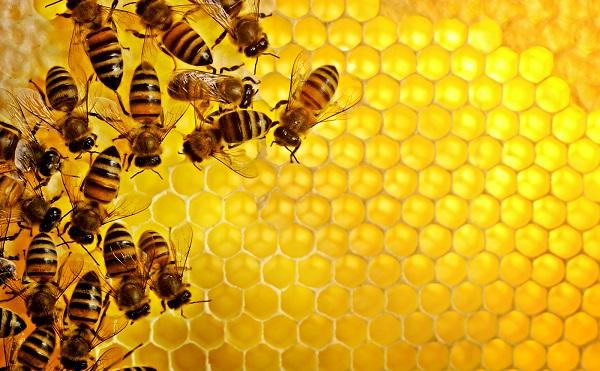 Évi 4,7 millió euró a méhészeti ágazatnak