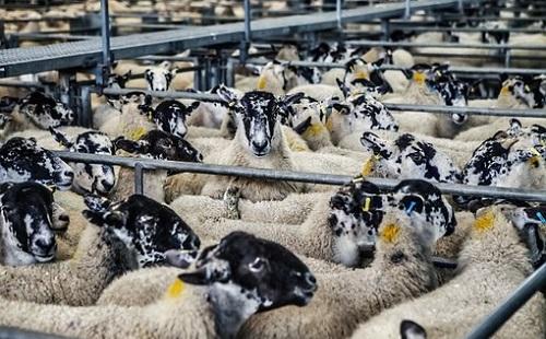 Növekedett a magyar élelmiszeripari kivitel