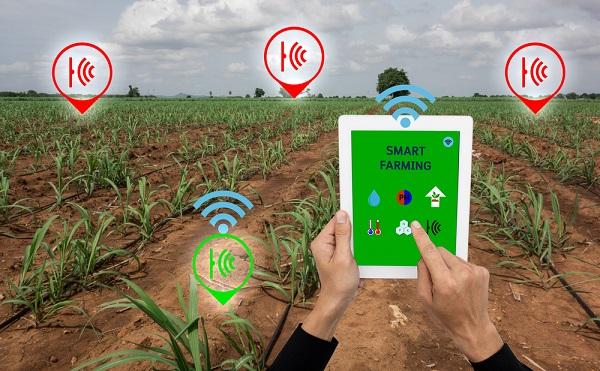 Agrárdigitalizáció: modern technológiával hagyományos élelmiszer