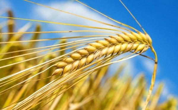Stratégiai megállapodás az agrárgazdaságért
