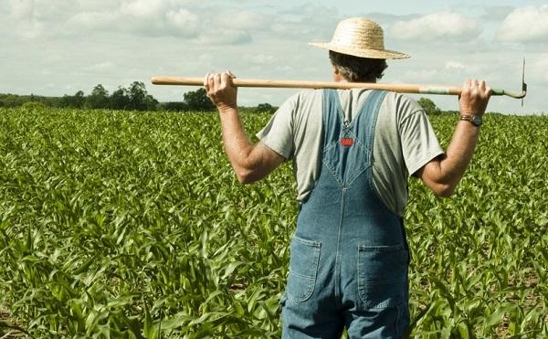 Ötvenezer új álláshely a mezőgazdaságban