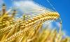 A V4-ek egyetértenek agrárkérdésben