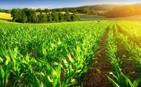 Stratégiai cél a környezettudatos mezőgazdasági termelés