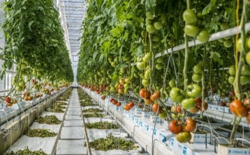 Növelni kell a növényházi termelést