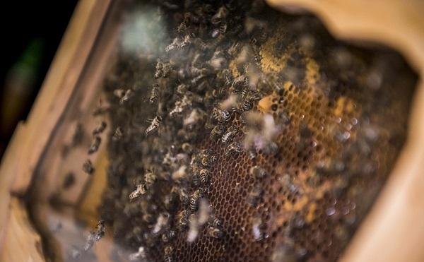 600 millió a méhészek támogatására