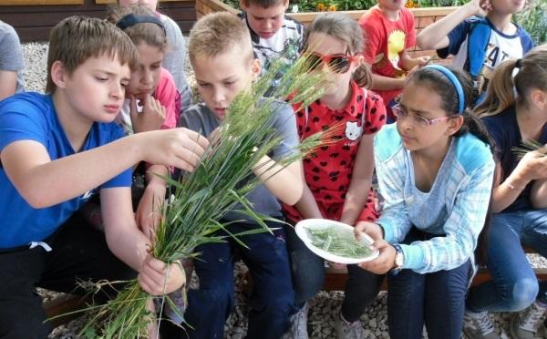 Bővíti az Országos Iskolakert-fejlesztési Programot az Agrárminisztérium