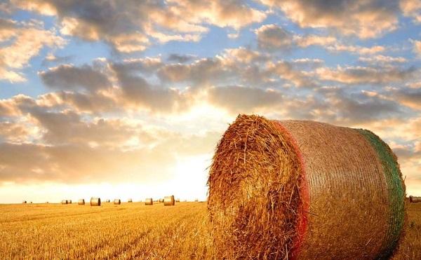 A mezőgazdaság fejlesztése kiemelten fontos a jövő szempontjából