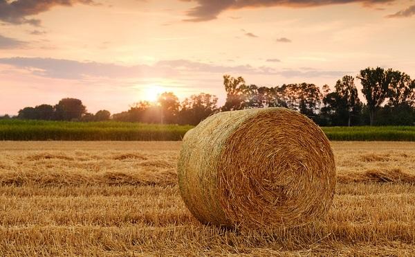 Nagy István: eredményes évet zárt a magyar agrárium