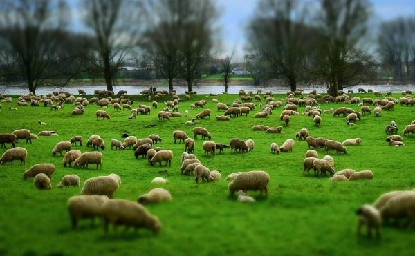 Újabb források segíthetik az állattartó telepek korszerűsítését