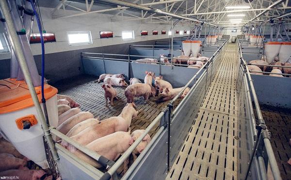 Kétmilliárd forintos pályázati lehetőség a hazai sertés- és baromfiágazat járványvédelmi beruházásainak támogatására