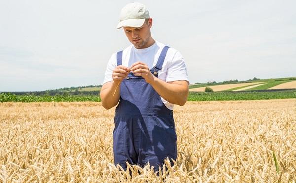Pályázat segíti a legkisebb gazdálkodókat
