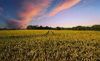 Kiemelkedő volt az idei év a hazai mezőgazdaságban