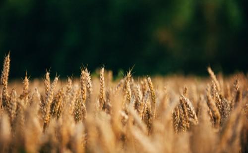 Lezajlott Magyarország legnagyobb mezőgazdasági kiállítása