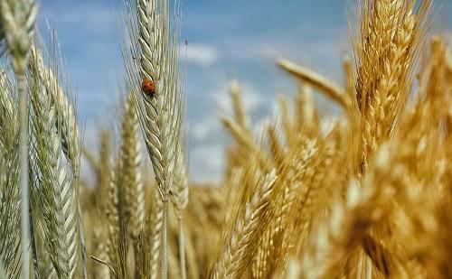 Nagyobb hangsúlyt fektetnek a biogazdálkodásra Magyarországon