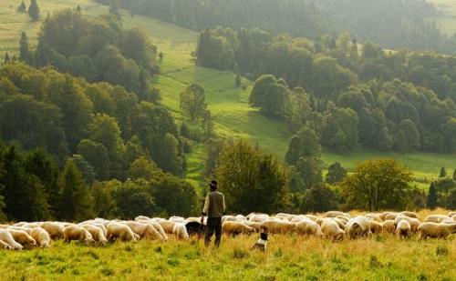 Gőzerővel folyik az állattartó telepek modernizálása