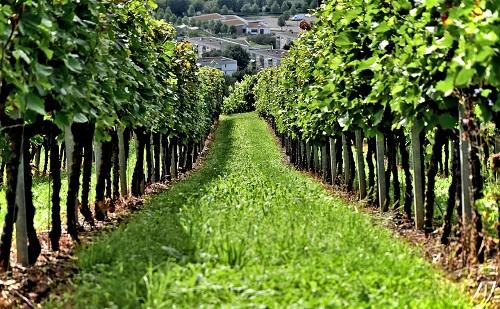 A földművelés hatékonyságának kulcsa a biodiverzitás