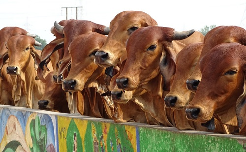 Sokan töltötték ki az állatvédelemről szóló kérdőívet