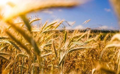 A mezőgazdaságot is segítheti a digitalizáció