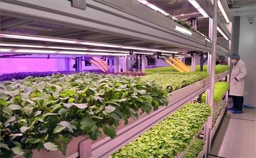 Innovatív vertikális farmot avatott a Tungsram