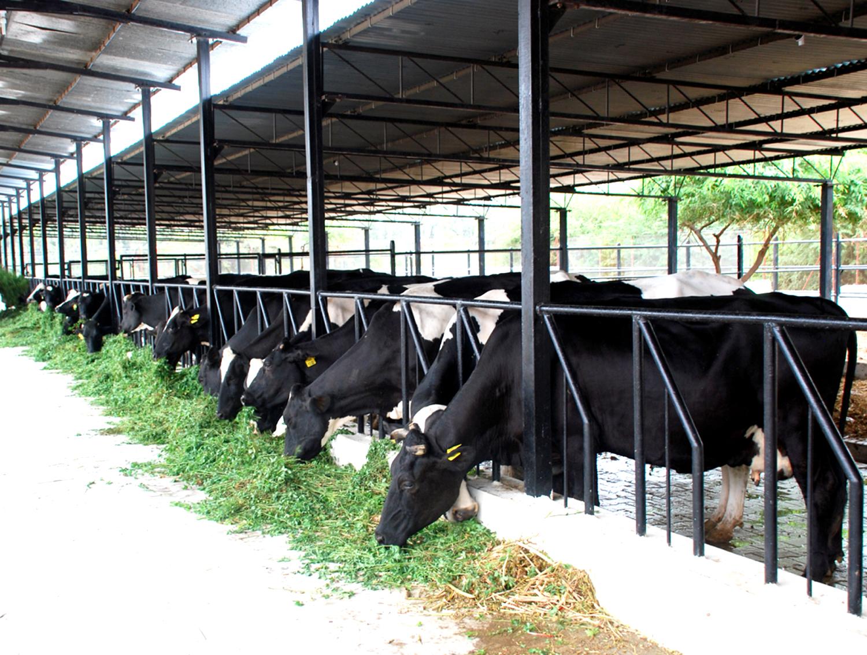 A pályázati lehetőség állattartó telepek fejlesztéséhez hamarosan elindul