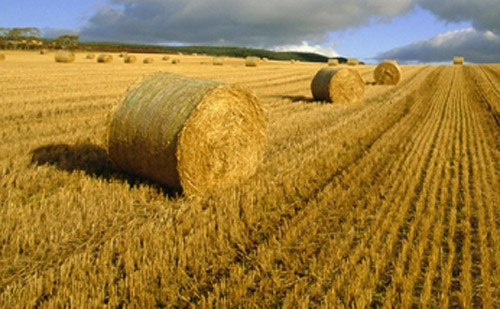 Ősszel jelennek meg a vidékfejlesztési pályázatok
